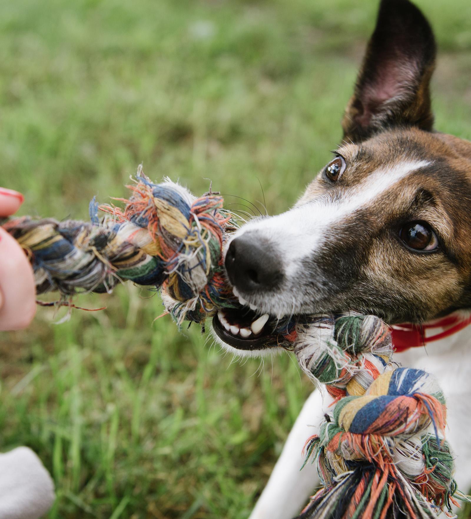 Rehabilitating A Reactive Dog: Topher's Story | Victoria ...