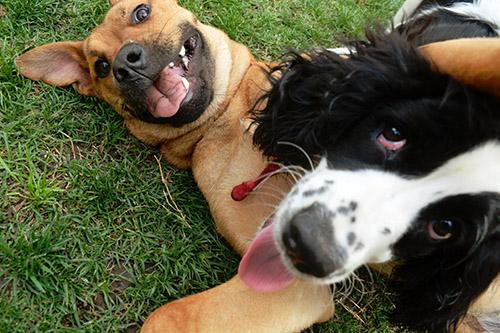 dog-socialization