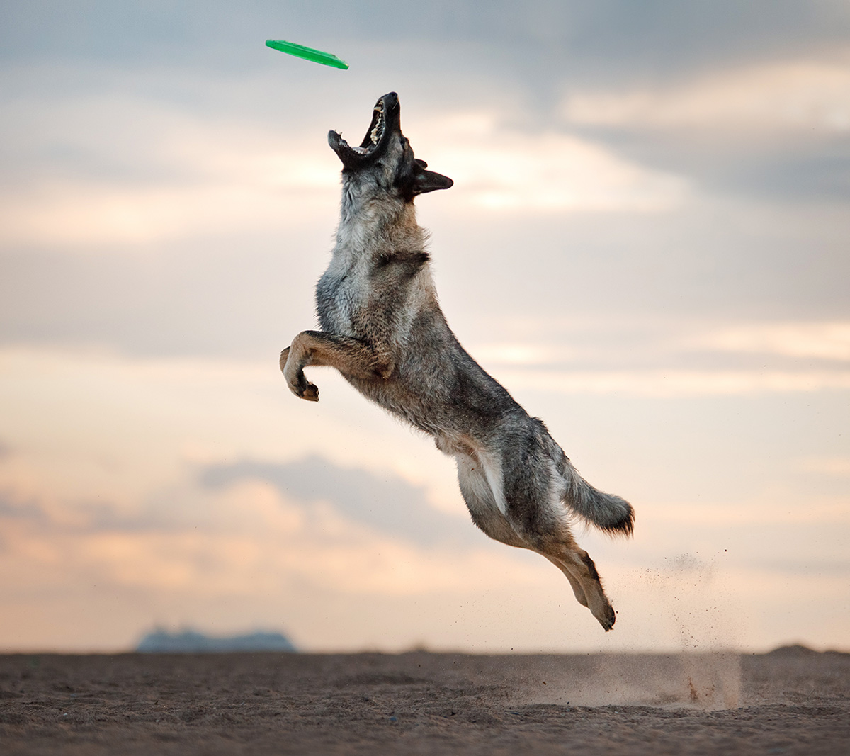 off-leash-dog-training