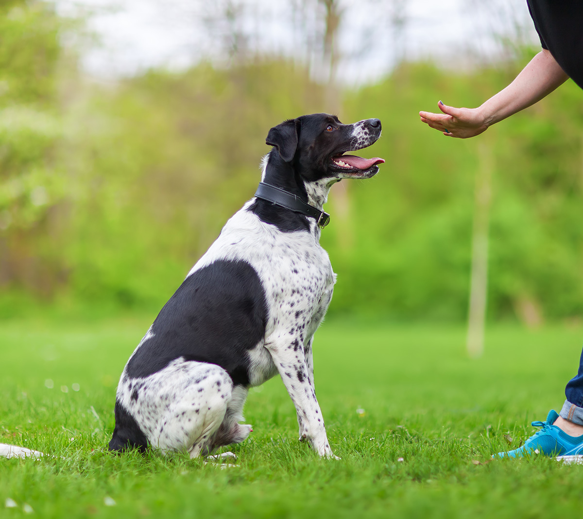 private-session-dog-training
