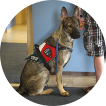 service-dog-training
